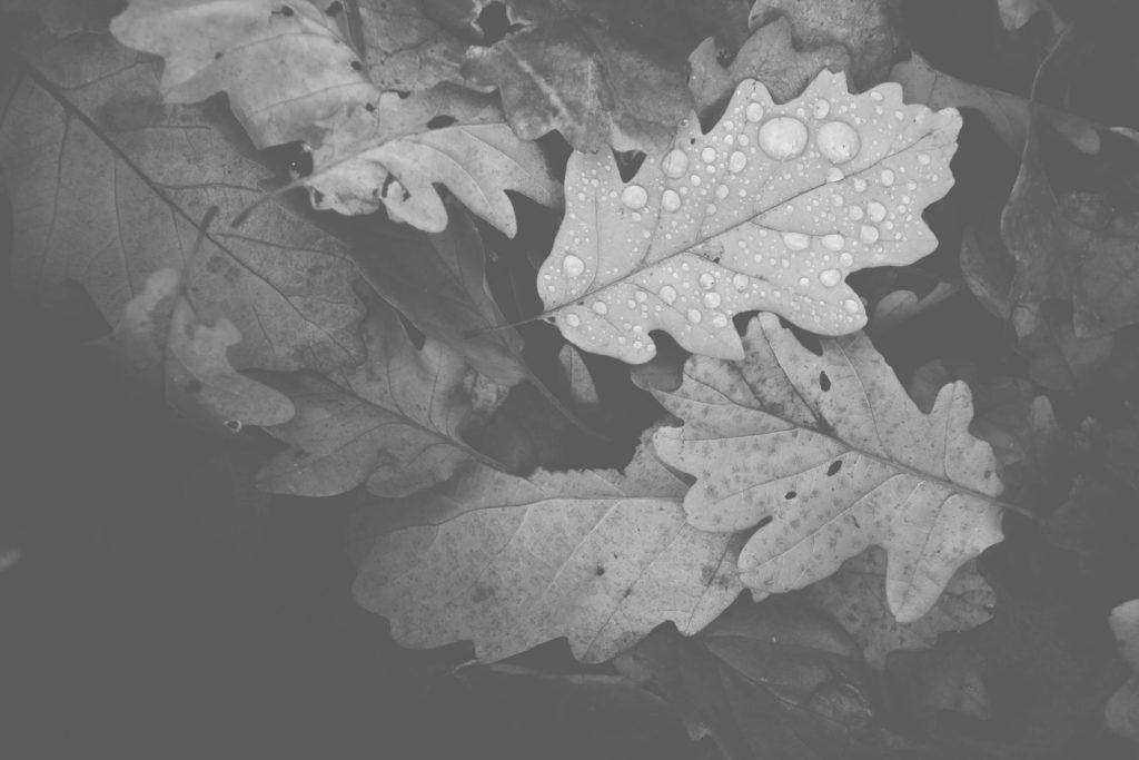 abstract-autumn-autumn-colours-688830